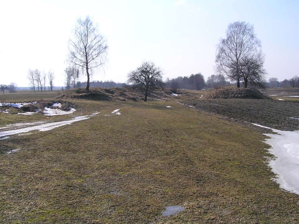 5_2011-03-12.JPG